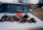 birdsonhood
