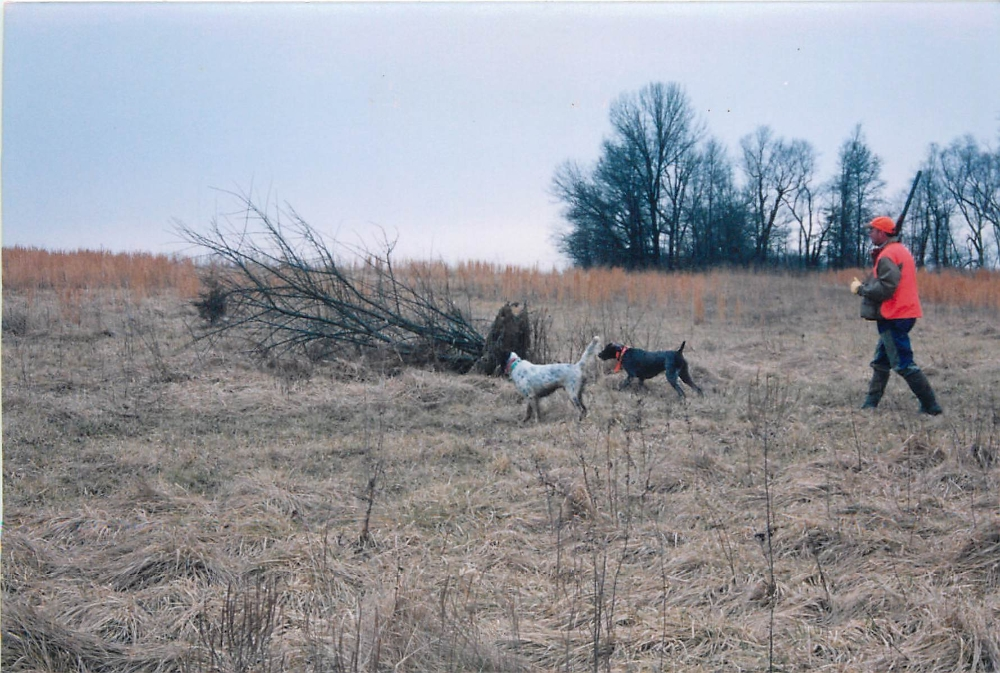 dogs_hunting3
