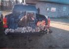 dog_in_truck