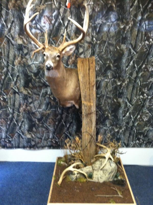 deer-wall